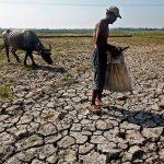 Nông nghiệp khô héo vì El Nino