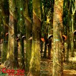 Điệu hát của rừng