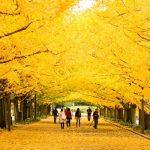 Nhìn mùa thu đi