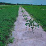 Bình Phước điều chỉnh quy hoạch trồng cao su trên đất lâm nghiệp