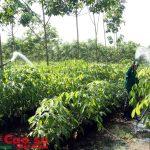 Điều chỉnh kế hoạch nông nghiệp 2016