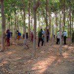 Công ty CPCS Đồng Nai-Kratie tập huấn khai thác mủ