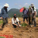 Kon Tum: Trồng mới gần 2.106 ha cao su tiểu điền