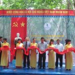 Cao su Quảng Nam: Mở miệng cạo 100 ha tại Nông Sơn