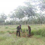 Nông trường Phú Xuân mang thu nhập cho đồng bào