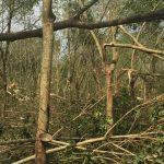 Gió lốc làm gãy đổ 80 ha Cao su Mang Yang