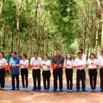 Đồng Nai - Kratie mở miệng cạo 200 ha cao su