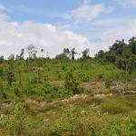 Không cho chuyển rừng nghèo sang trồng cây công nghiệp