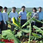 Chú trọng đầu tư trực tiếp, đảm bảo tốc độ tăng trưởng vườn cây