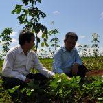 Quản lý suất đầu tư và trồng xen ở Tây Nguyên, miền Trung: Bước đầu hiệu quả