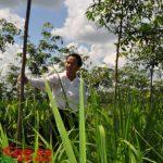 Cao su Quảng Trị: Suất đầu tư 70,5 triệu đồng/ha