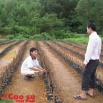 Quảng Nam tìm cách giúp cao su tiểu điền vượt khó