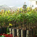 Giống cây trồng phải được bảo hộ