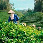 Nhiều vướng mắc trong sắp xếp, đổi mới công ty nông lâm nghiệp