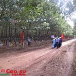 Cao su Chư Păh đẩy mạnh ứng dụng quản lý vườn cây