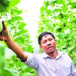 Làm kinh tế gia đình với mô hình nông nghiệp công nghệ cao