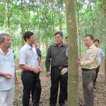 VRG - Điện Biên: Sớm thống nhất tính pháp lý của hợp đồng góp đất