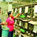 Những mô hình chăn nuôi hiệu quả cao