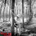 Dòng kẻ của rừng