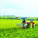 Nông nghiệp và 3 thách thức lớn