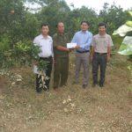 Cao su Hương Khê - Hà Tĩnh: Hơn 20 ha cao su ngập do lũ lụt