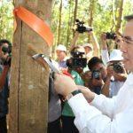 Khai thác cao su tại Lai Châu: Thành quả đầu tiên