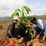 Cao su Kon Tum: Trồng xen toàn bộ diện tích trồng 2013-2015