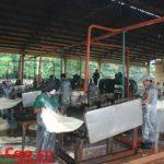 Cần quan tâm chất lượng mủ nguyên liệu tại vườn cây
