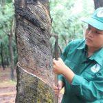 Nguyễn Thị Hồng Đào hoàn thành kế hoạch sớm nhất NT Đồng Nơ