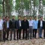Cần khai thác hiệu quả dự án phát triển cây cao su miền núi phía Bắc