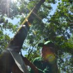 Thương nhớ tán rừng