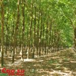 Trường thi Hội thi Bàn tay vàng: Vườn cây đẹp, dễ di chuyển