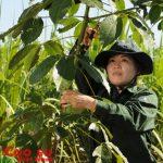 Tiếp tục chú trọng nâng cao công tác nông nghiệp