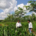 Kinh tế gia đình và trồng xen: Cần thêm sự tiếp sức