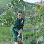 Chăm vườn cao su
