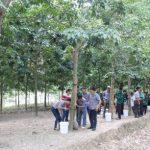 Hơn 500 CN Cao su Sơn La tham gia lớp học khai thác mủ