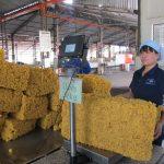 Xuất khẩu cao su tăng gần 91% về giá trị so cùng kỳ