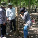 Cao su Krông Buk-Ratanakiri mở học cạo đầu tiên cho 24 công nhân Campuchia