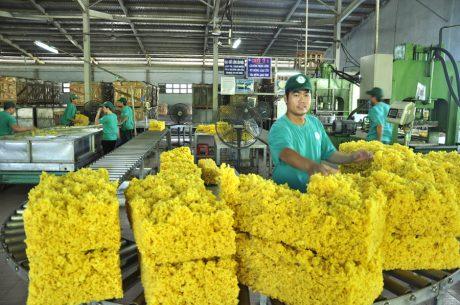 Trên 98% sản phẩm cao su Dầu Tiếng đạt tiêu chuẩn xuất khẩu