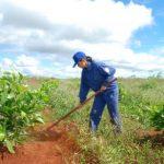 Đa dạng hóa cây trồng trên quỹ đất cao trình 700m
