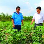 Điển hình phát triển kinh tế gia đình ở Cao su Phước Hòa