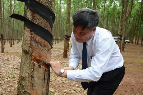 Ông Võ Sỹ Lực - Chủ tịch HĐTV VRG tham gia cạo lát cạo đầu tiên.