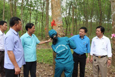 Kiểm tra vườn cây khai thác