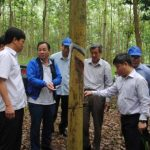 Tổ chức kỷ niệm 10 năm phát triển cao su miền núi phía Bắc tại tỉnh Sơn La