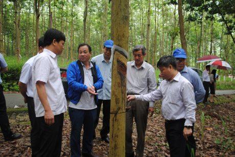 Phó TGĐ VRG Hứa Ngọc Hiệp - Trưởng Ban tổ chức kỉ niệm 10 năm phát triển cao su miền núi phía Bắc kiểm tra vườn cây Cao su Sơn La