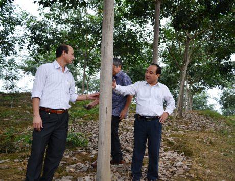 Phó TGĐ VRG Nguyễn Hồng Phú kiểm tra vườn cây KTCB ở Công ty CPCS Hà Giang năm 2013. Ảnh: Phi Long