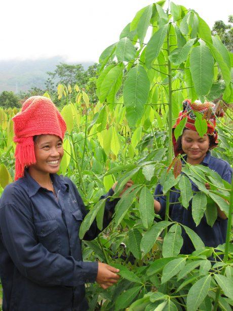 Nữ công nhân dân tộc Thái trên vườn cao su Tây Bắc
