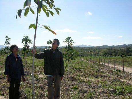 Anh Dương Viết Công (bên phải) kiểm tra sức sinh trưởng cây cao su cùng bà con đồng bào