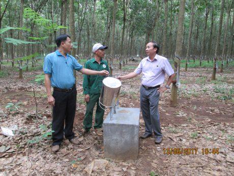 Phó GĐNT 9 Phùng Đức Phương, công nhân Trần Tuấn Anh và Tổ trưởng tổ 9 Tô Vĩnh Phú bên sàn để mủ tạp mới sạch đẹp