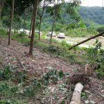 Bão số 2 làm gãy đổ hơn 1.100 cây Cao su Hương Khê – Hà Tĩnh
